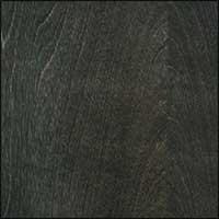 Blackened Birch #23