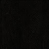Black Birch #24
